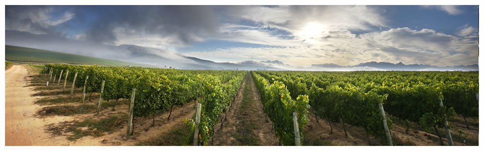Stellenbosch Wine Tours - Full Day and Half Day Wine Tours of Stellenbosch